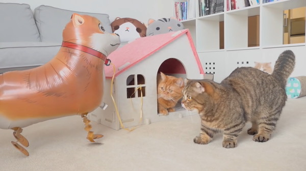 風船を凝視する猫たち
