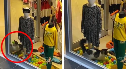 洋服屋さんのボールで遊ぶ猫