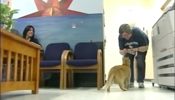先生にご飯をもらう猫