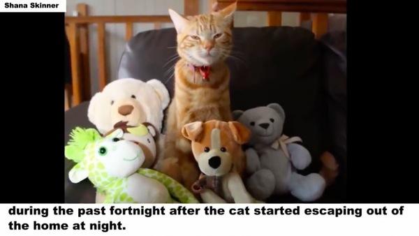 ぬいぐるみと猫のムファサ