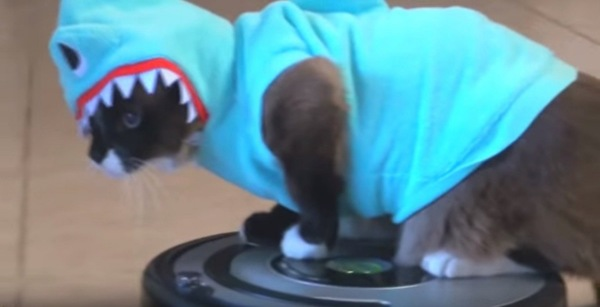 ルンバに乗った猫
