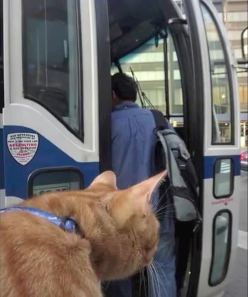 バスに乗り込む猫