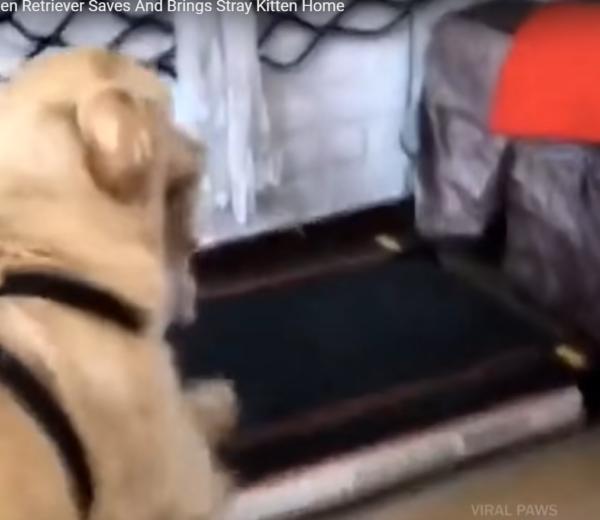 子猫を自分のお家につれて帰る犬