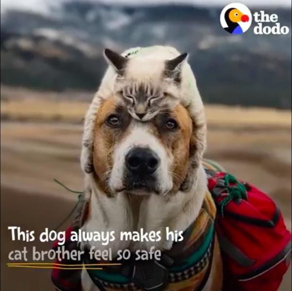 犬の頭に乗る猫