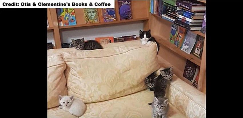 昼寝をする子猫たち