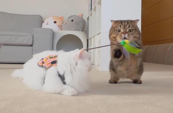 猫に遊んでもらう猫