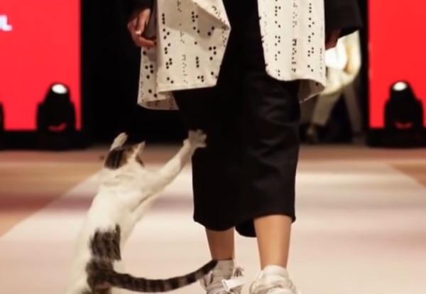 モデルに猫パンチする猫