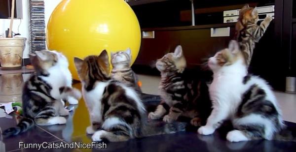 黄色のボールと子猫