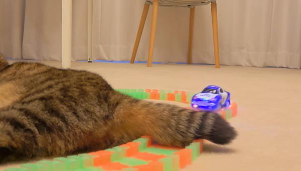 猫のしっぽに突進するミニカー