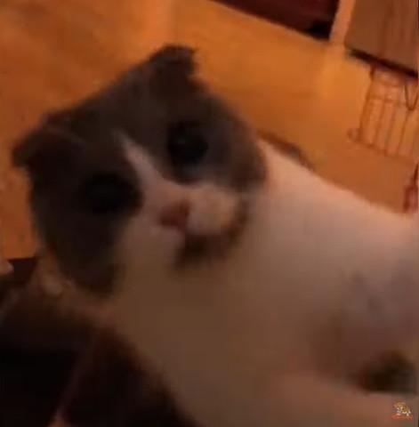 だるまさんがころんだ!でタッチしてくる猫