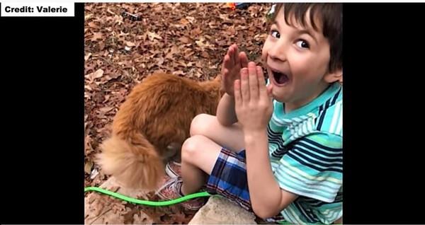 猫を見て喜ぶ男の子