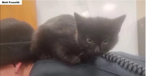 飼い主の背中の上に乗る黒猫
