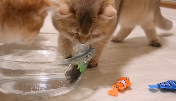 最後に残った魚のおもちゃを捕まえた猫