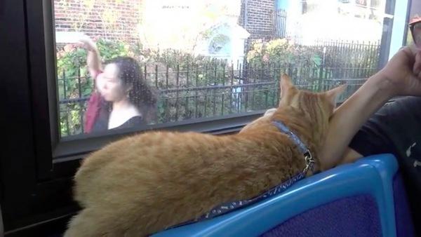 車内からお外観察する猫
