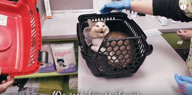 手当を受ける猫