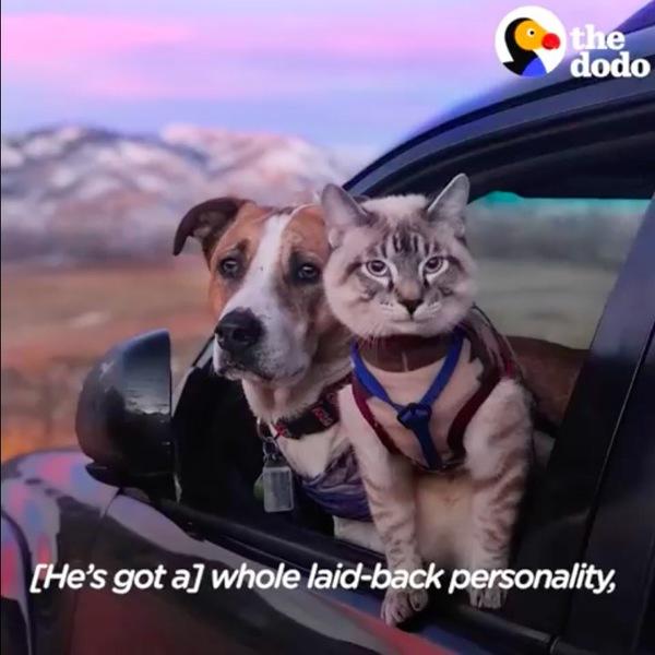 車の中にいる犬と猫