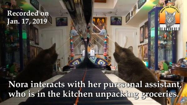 台所が気になるピアノ猫
