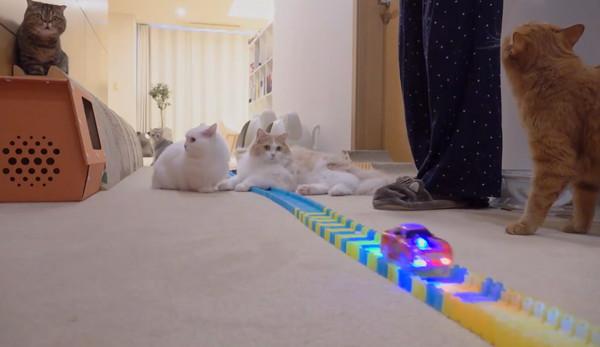 走るミニカーを見つめる4匹の猫