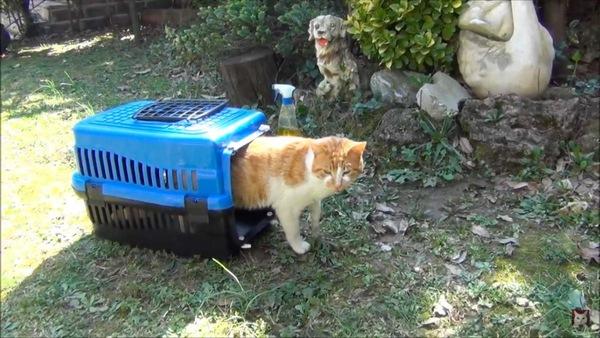 お庭猫に仲間入り