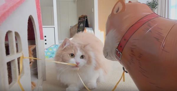 風船の紐を引っ張る猫