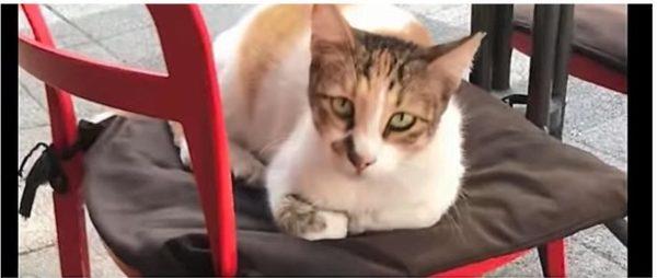椅子の上に座る猫