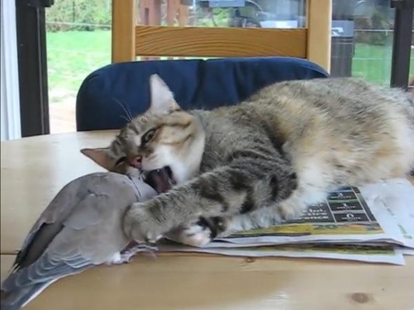 猫の反撃開始