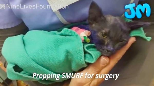 手術を待つ猫