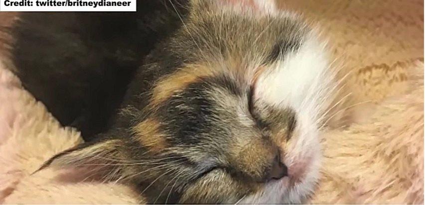 寝姿で寝る子猫のシャネル