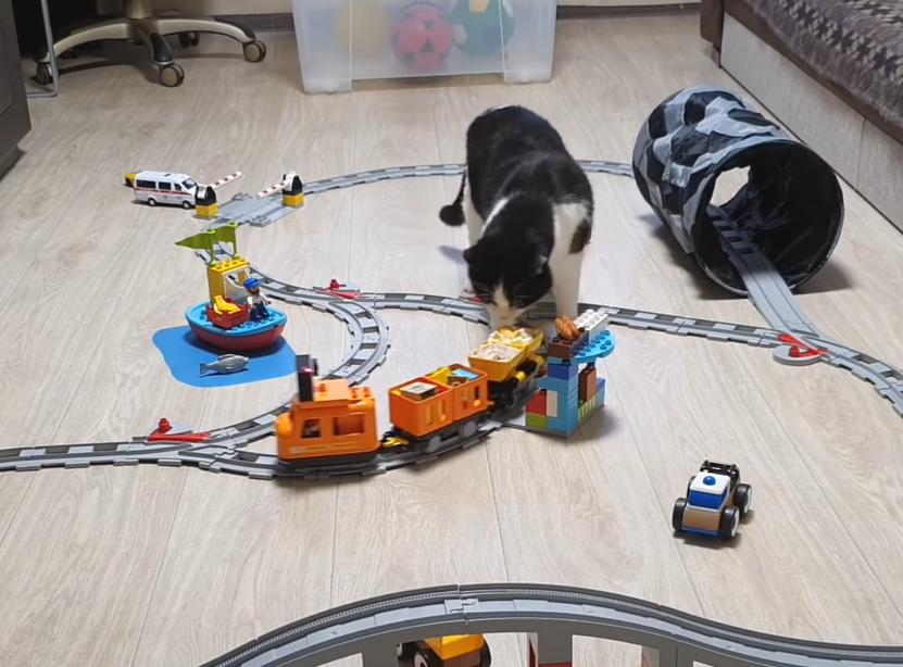 おもちゃのクレーンが運ぶおやつを狙う猫