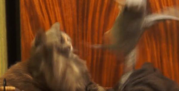 オウムに怒った猫