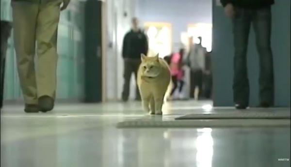 学校の廊下を歩く猫
