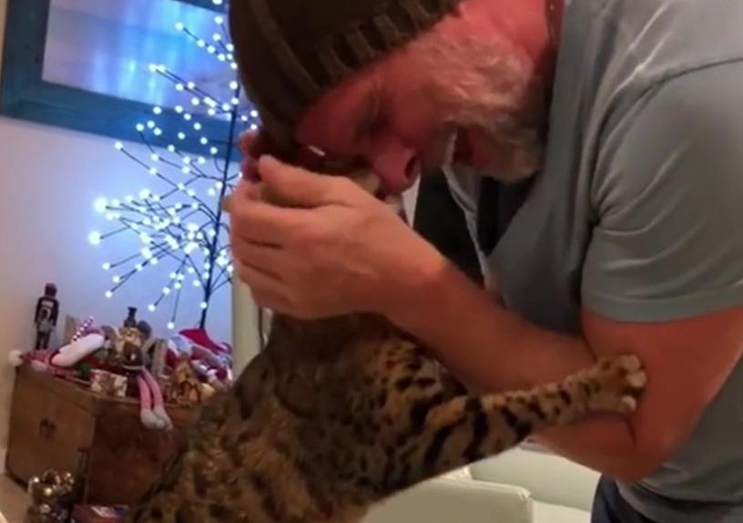 飼い主が大好きなベンガル猫
