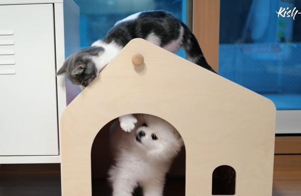 犬小屋に登る子猫
