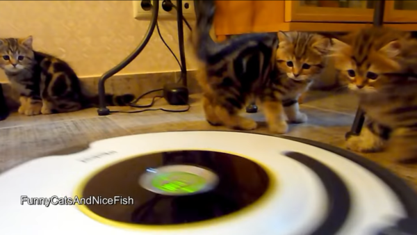 ルンバを警戒する子猫