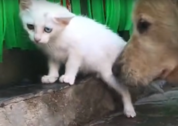 子猫を助ける犬