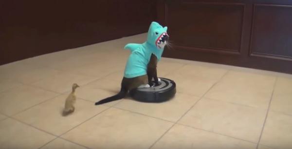 猫鮫を追いかけるひよこ
