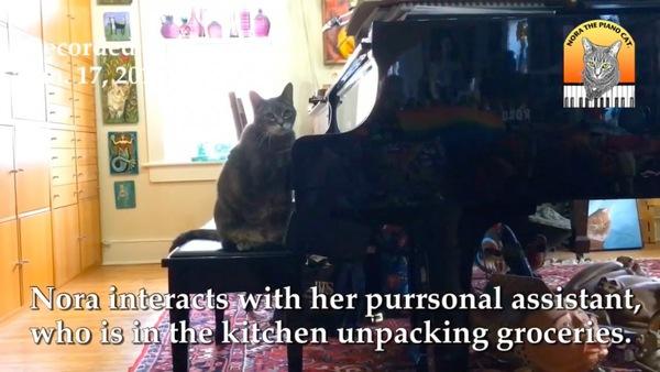 キッチンを気にするピアノ猫