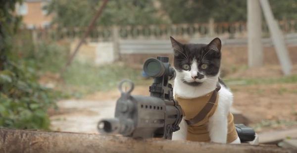 援護射撃をした猫