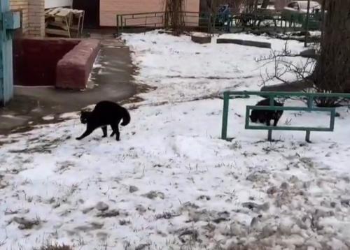 固まる猫たち