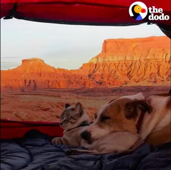 テントの中にいる猫のバルーと犬のヘンリー