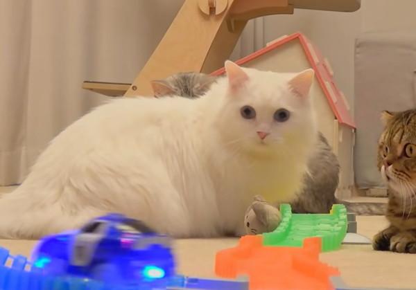 ミニカーに驚く猫