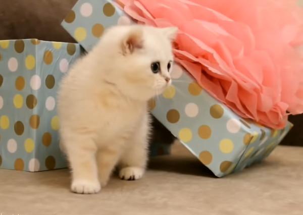 不思議そうに見つめる子猫