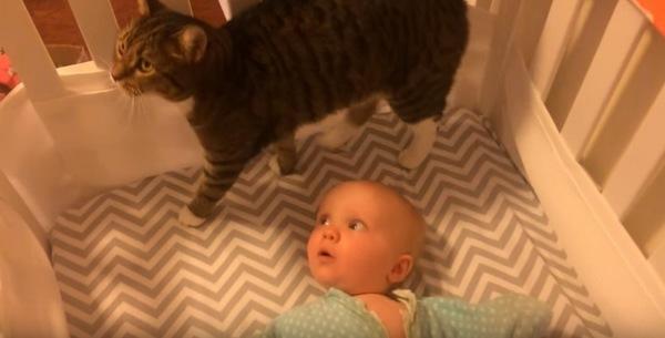 赤ちゃんの頭上にいる猫