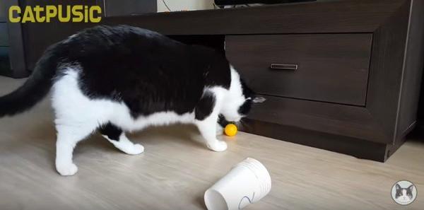 ボールを捕まえる猫