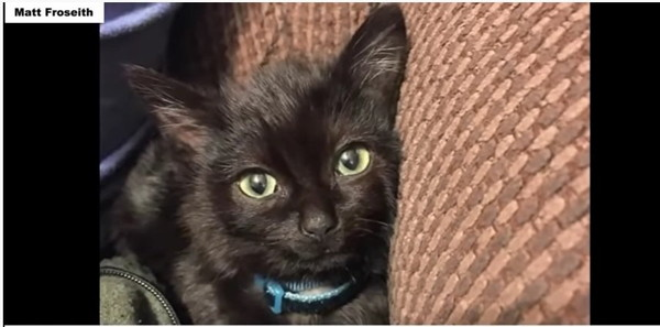 ソファーで横になる黒猫