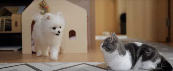 ダンボールハウスと犬と猫
