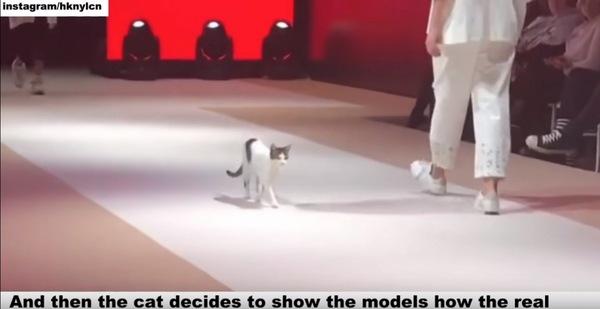 モデルと歩く猫