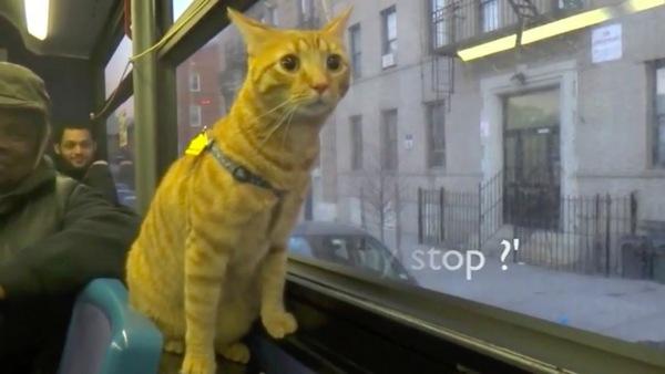 心配する顔の猫