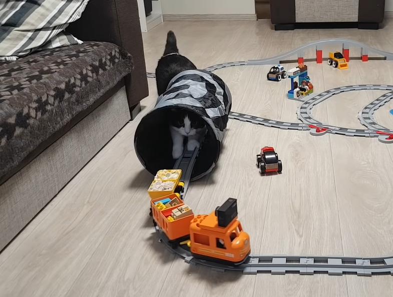トンネルの中まで追いかける猫