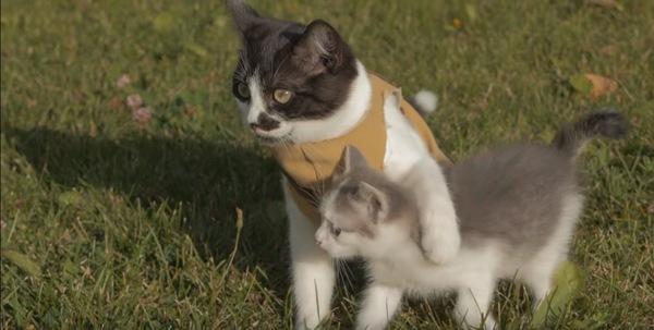 子猫の救助成功